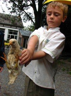 Thomas le chasseur de poulet