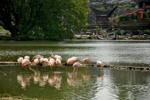 Pairi Daiza - Flamand Rose