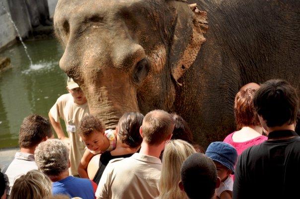 Pairi Daiza - Les éléphants