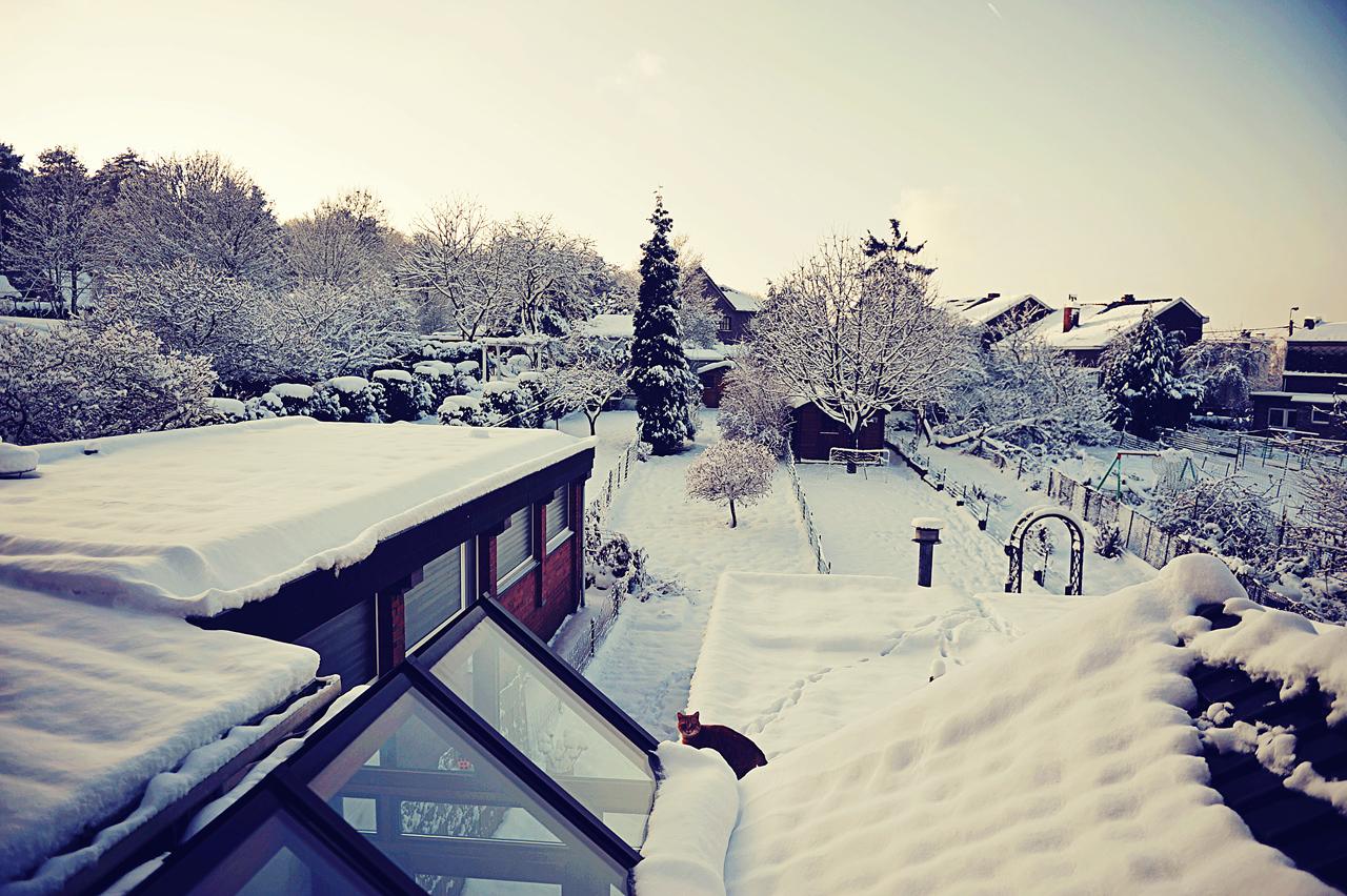Mon jardin, sous la neige de décembre 2010