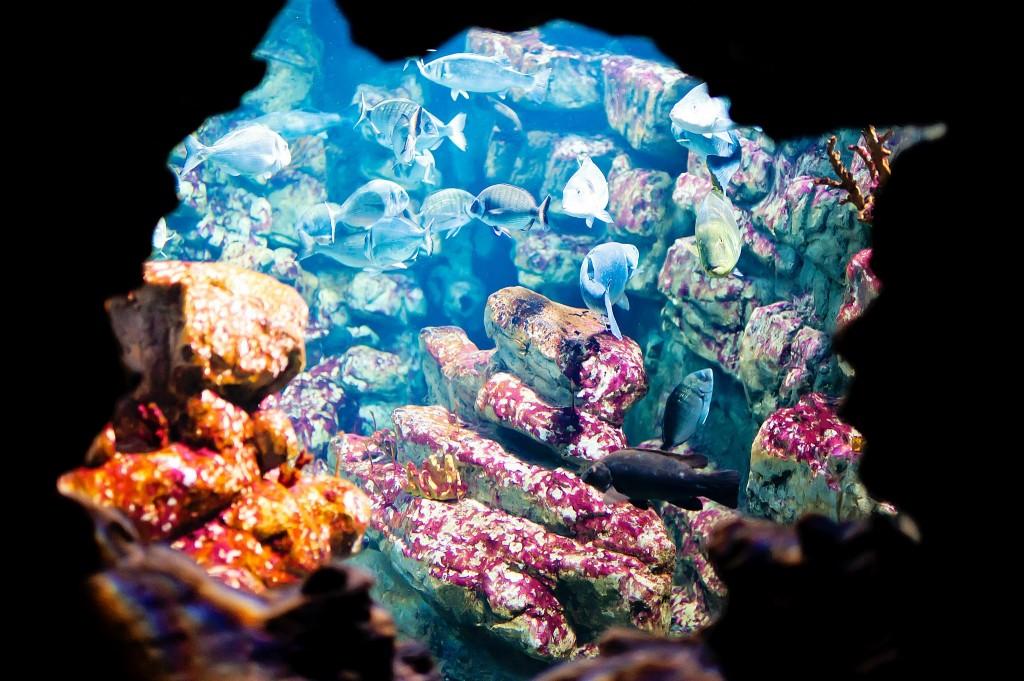 Aquarium Odysseum - Montpellier