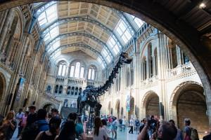 Londres - Musée d'Histoires Naturelles