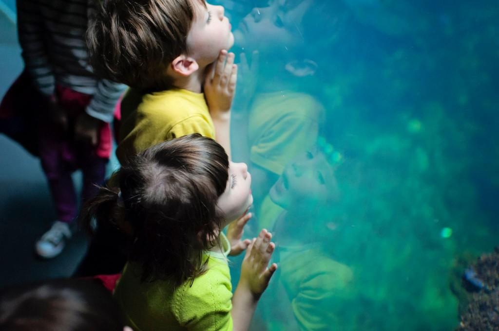 Visite du Nausicaa de Boulogne sur Mer