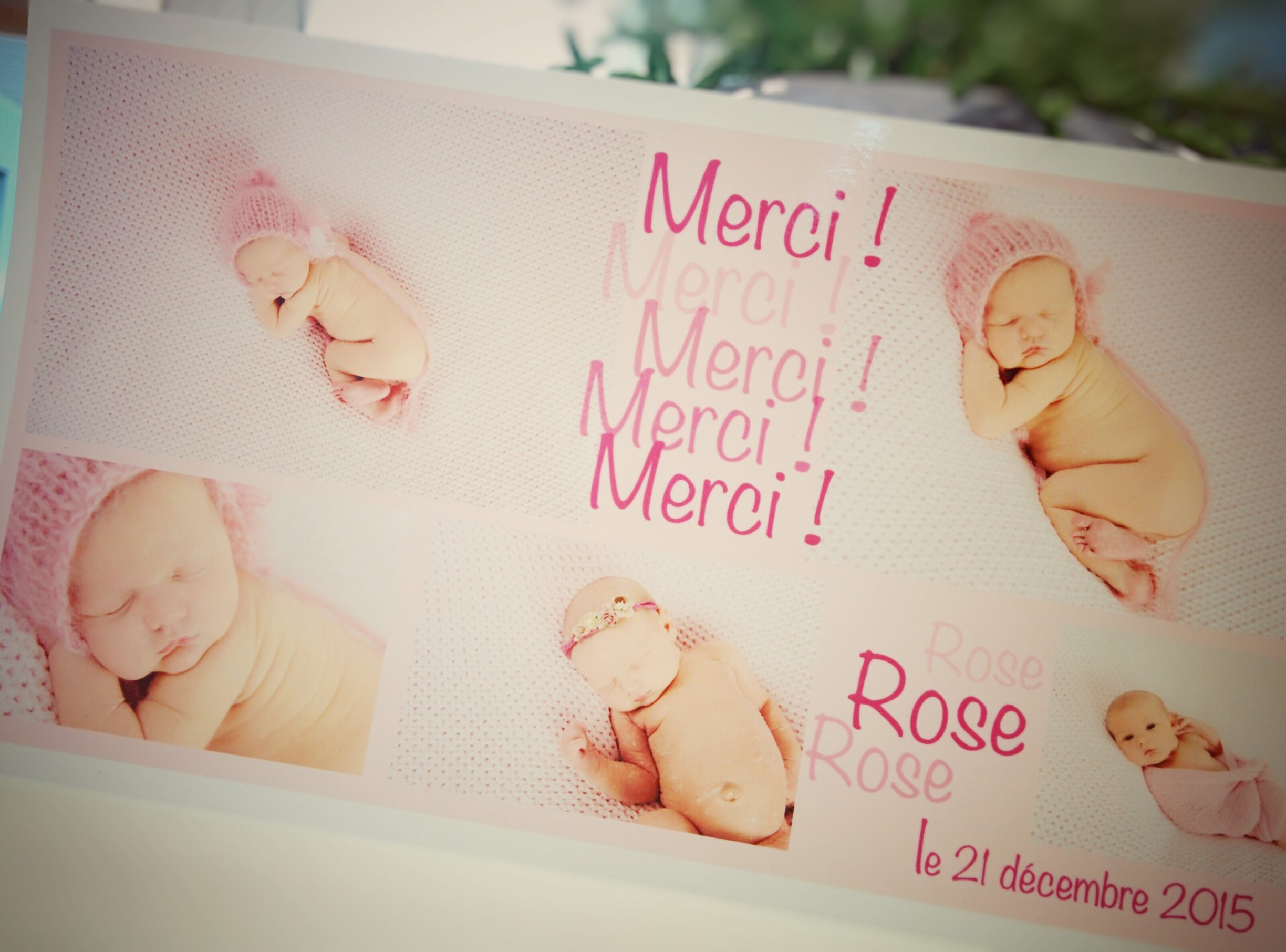 Rose... merci