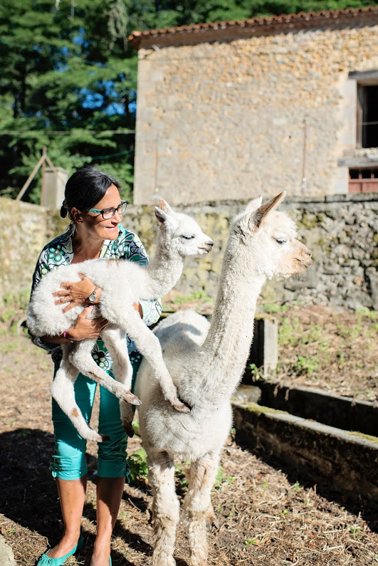 vacances 2016 - domaine de brassac - l'arrivée tant attendue d'un bébé alpaga
