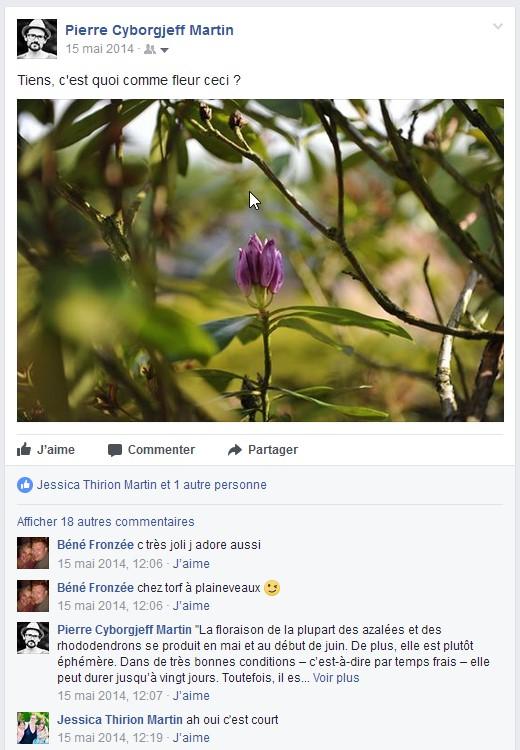 Facebook 2014, Rhododendron