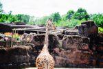 PasLoinDeChezNous #1 – Le Zoo Gaia