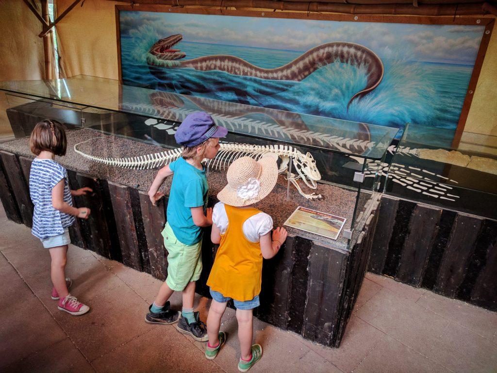 Le Dragon de Komodo, l'un des derniers descendants de Dinosaures ! – à GaiaZOO.