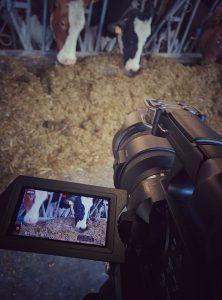 As-tu vu la vaches ? Projet en faculté vétérinaire (2016)