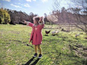 Coucou les poules - Une campagne en Provence