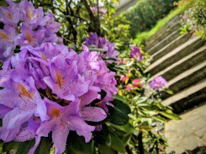 Les escaliers fleuris