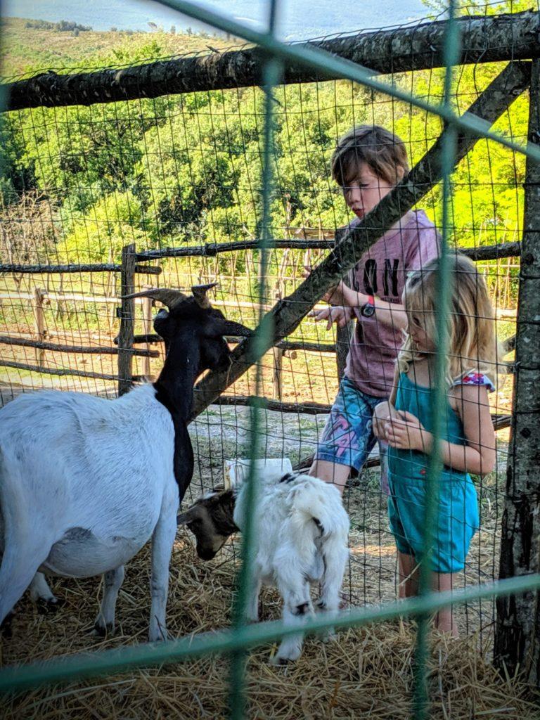 A la petite ferme de la Casa Verniano - Agriturismo