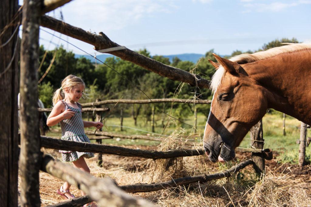 Petite visites aux animaux après le déjeuner - Casa Verniano