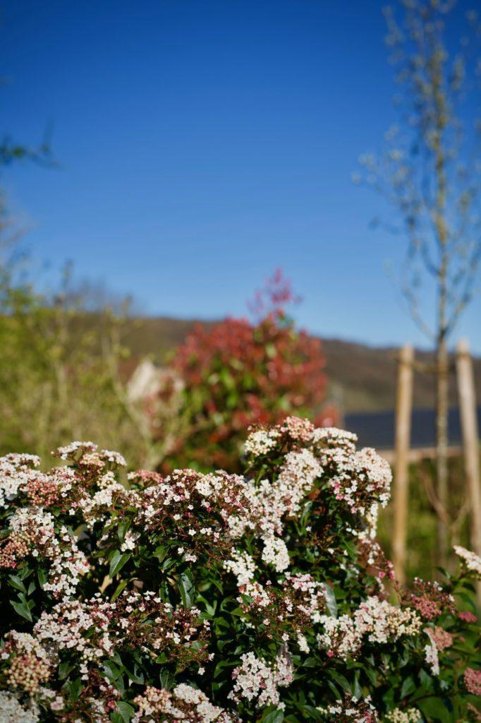 Je n'ai pas retenu sont nom, mais nous avons eu droit à de jolies petites fleurs roses et blanches tout l'hiver
