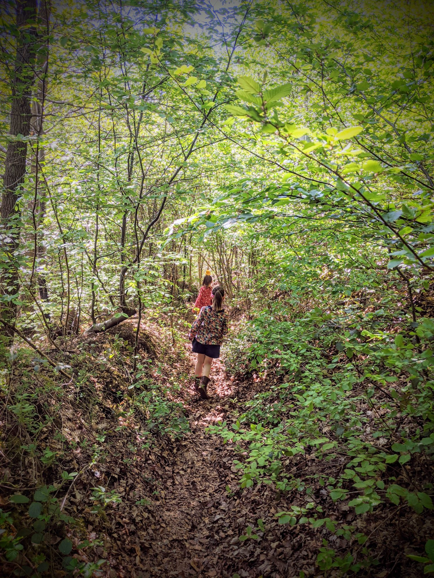 En balade dans la forêt