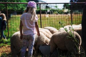 Rose voulait voir des moutons - La Ferme de Haya - Petite Snorkys Photography