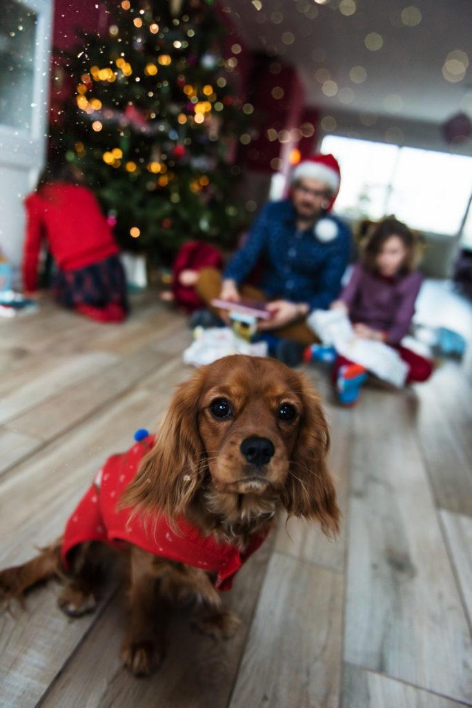 Wouf Wouf *(Joyeux Noël en chien)