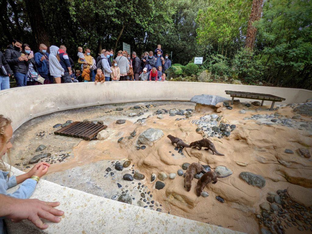 Pauvres loutres... - Le Zoo de la Palmyre