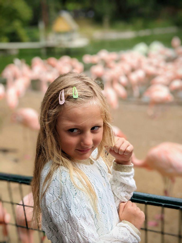 Mmm, ça ne sent pas bon tous ces flamands rose - Le Zoo de la Palmyre